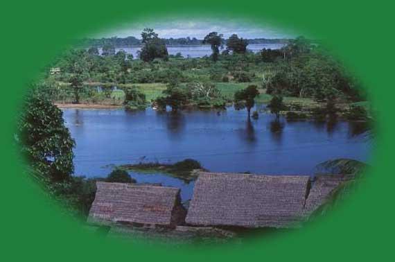 Logo for Jungle Photos